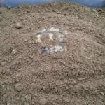 Griechische Landschildkröte in Überwinterungskiste