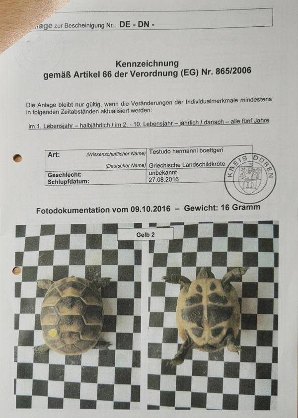 Fotodokumentation zur EU-Bescheinigung CITES für Griechische Landschildkröten
