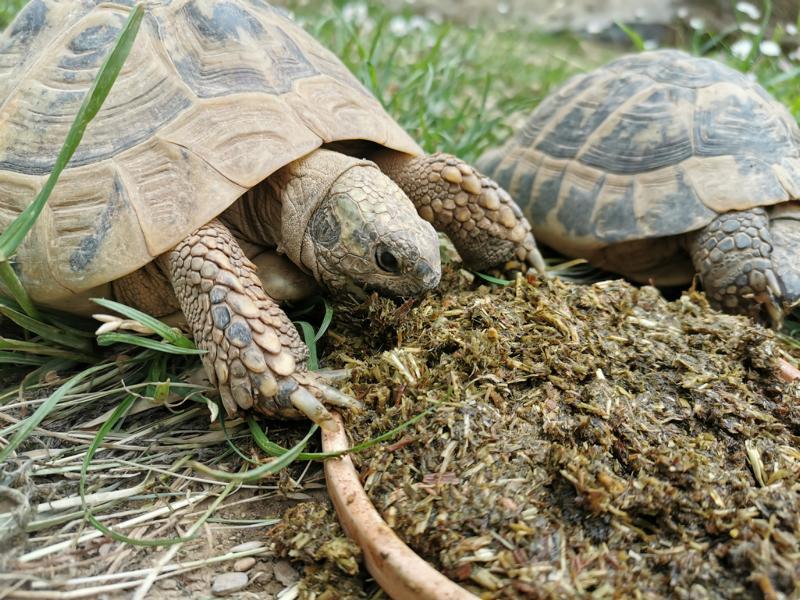 Agrobs Schildkrötenfutter für eine artgerechte Landschildkröten Ernährung