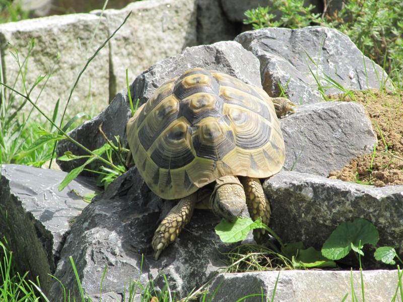 Schildkröten benötigen ein abwechslungsreiches Gehege