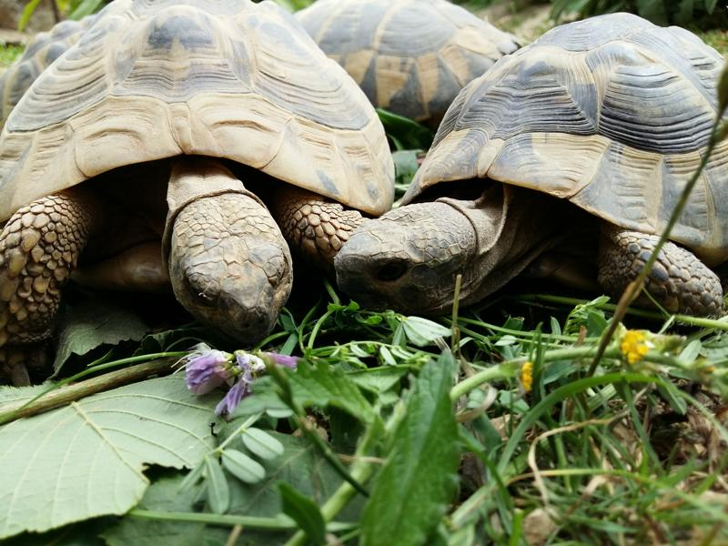 Schildkröten abwechslungsreich füttern